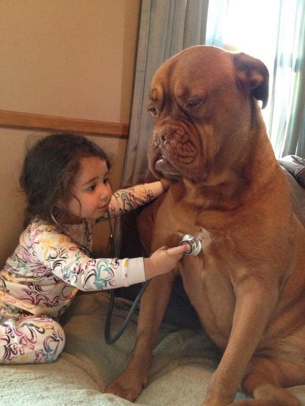 Photo of a little girl using a stethoscope to 'listen' to the heart of an enormous dog patiently sitting next to her.
