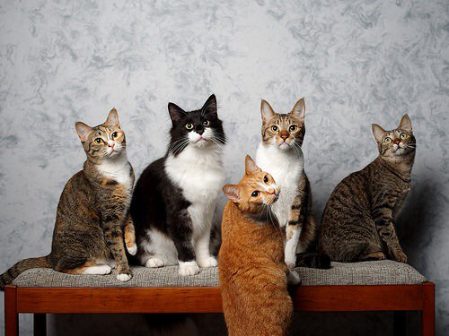Lisa Berne, author of historical romance, admires a surrealistically realistic photo of five charmingly grouped cats.