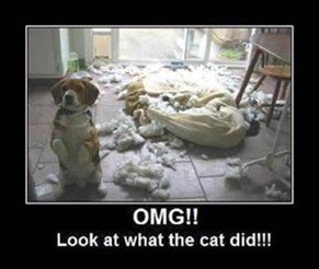 Photo: a dog poses in front of his bed which he's plainly ripped to shreds. Caption: OMG!! LOOK AT WHAT THE CAT DID!!!