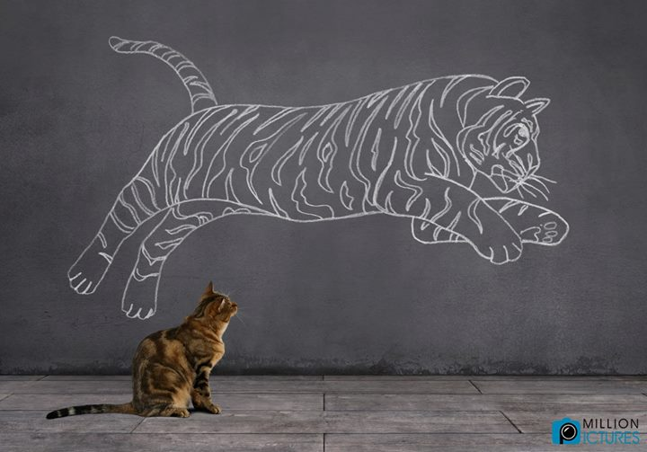 Image: a cat contemplating a large drawing of a tiger