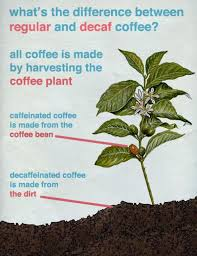 "Graphic: ""What's the difference between regular coffee and decaf?"""