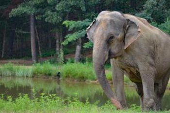 Photo: Sissy At The Elephant Sanctuary In Tennessee, shared via LisaBerne.com