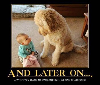"Photo of a baby and a large dog looking at each other; the caption reads ""And later on . . . when you learn to walk and run, we can chase cats!"""