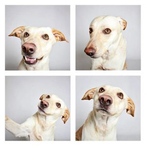 """Photo-booth"" portrait of a dog up for adoption at the Humane Society of Utah."