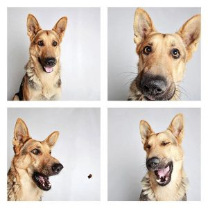 "A ""photo-booth"" portrait of a dog up for adoption at the Humane Society of Utah."