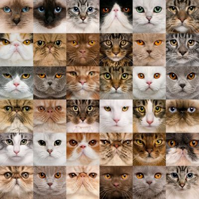 Image: many cat-faces
