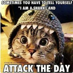 """Graphic: """"Sometimes you have to tell yourself 'I am a shark' and attack the day"""""""