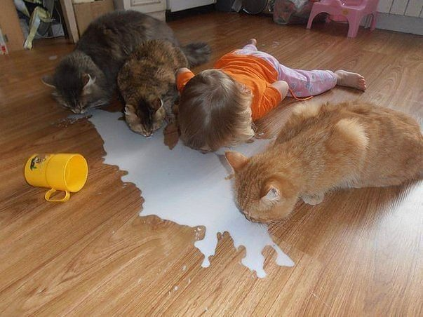 Photo: three cats and a toddler busily licking up a puddle of spilled milk