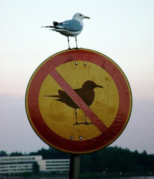 "Photo: a seagull sitting on top of a ""no seagull"" sign."