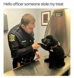"Graphic: ""Hello officer"" - shared via LisaBerne.com"
