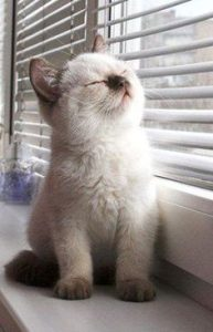 Photo: a peaceful kitten for Feelgood Friday, shared via LisaBerne.com
